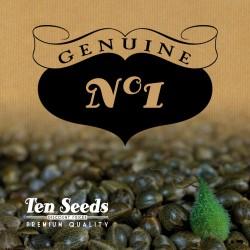 Ten Seeds - N°1 - Critical Flow