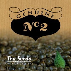 Ten Seeds - N°2 - White Widow 90's