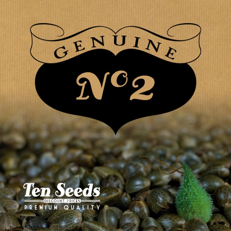 Ten Seeds - N°2 - White Widow 90's