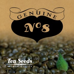 Ten Seeds - N°8 - Real Afghan