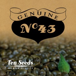 Ten Seeds - N°43 - Pakistan'Haze Auto