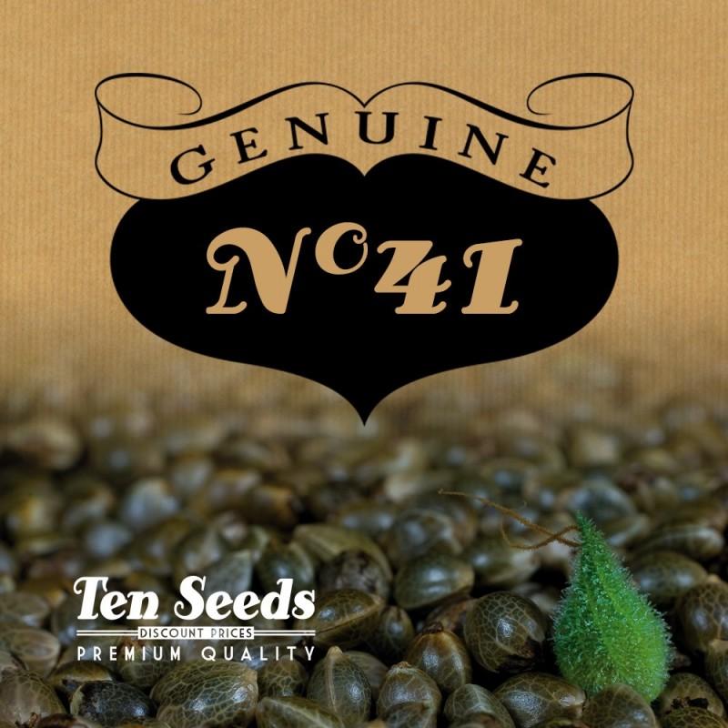 Ten Seeds - N°41 - Titanium Haze