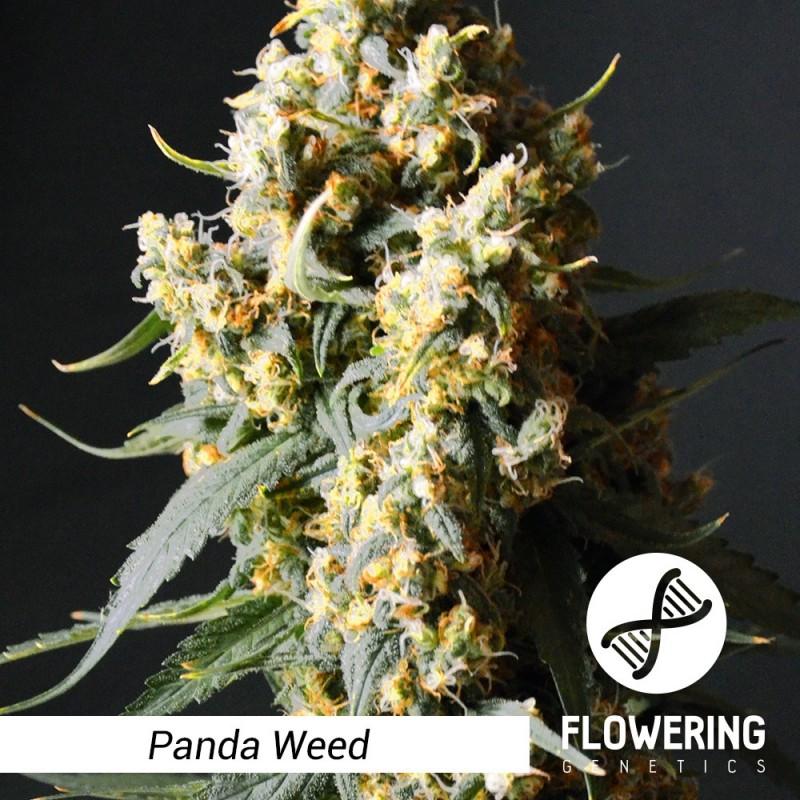 Flowering Genetics - Panda Weed