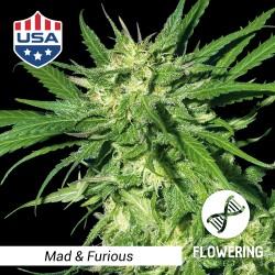 Mad & Furious