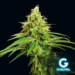 Gualuka - Amnezia